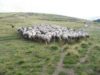 Fête du mouton à l' estive de garnier le 22 juillet 2018